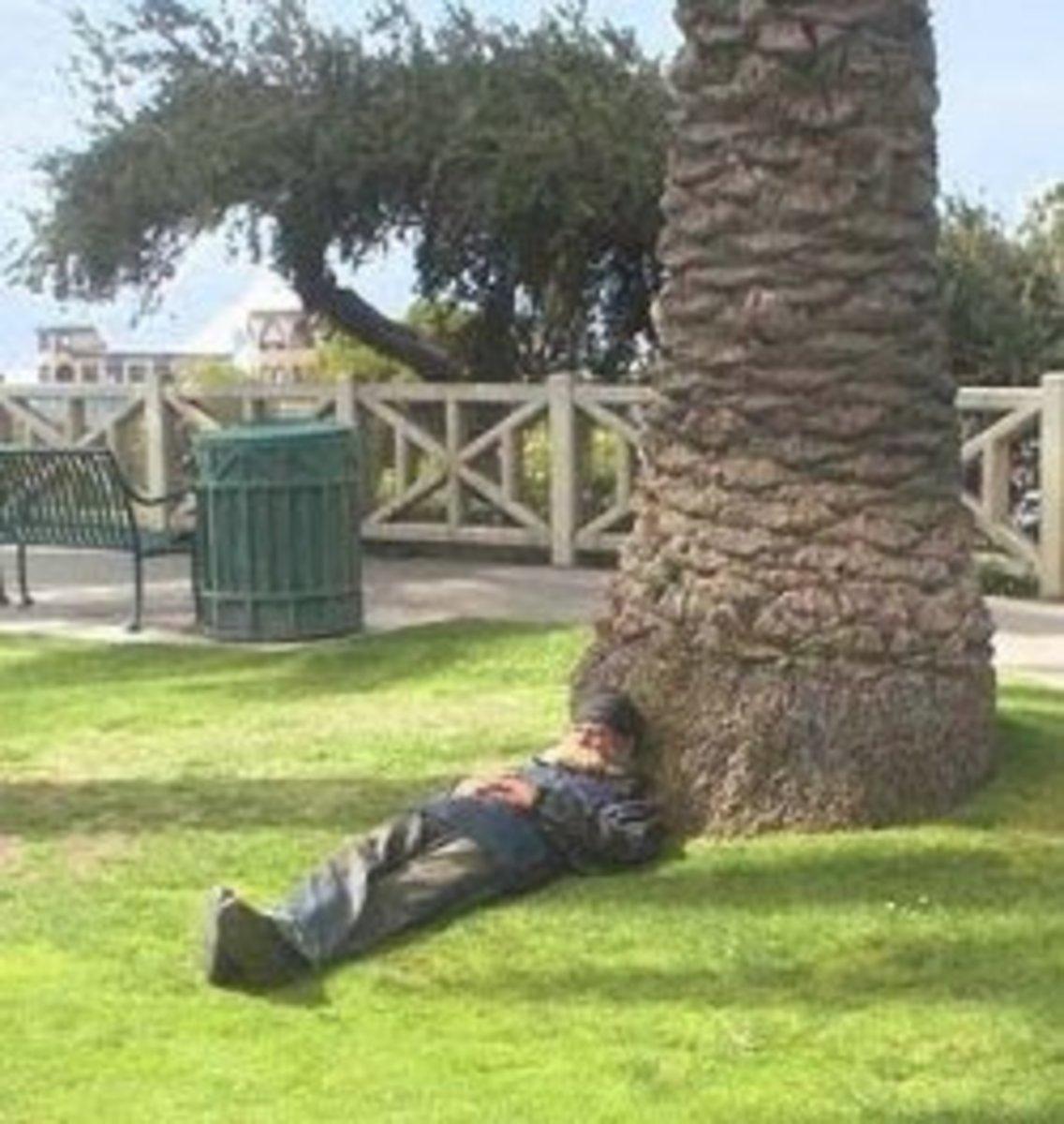 Homeless man sleeping under a palm tree in Santa Monica