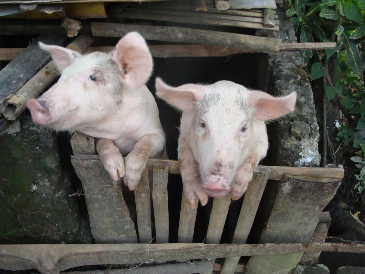 Pork is illegal