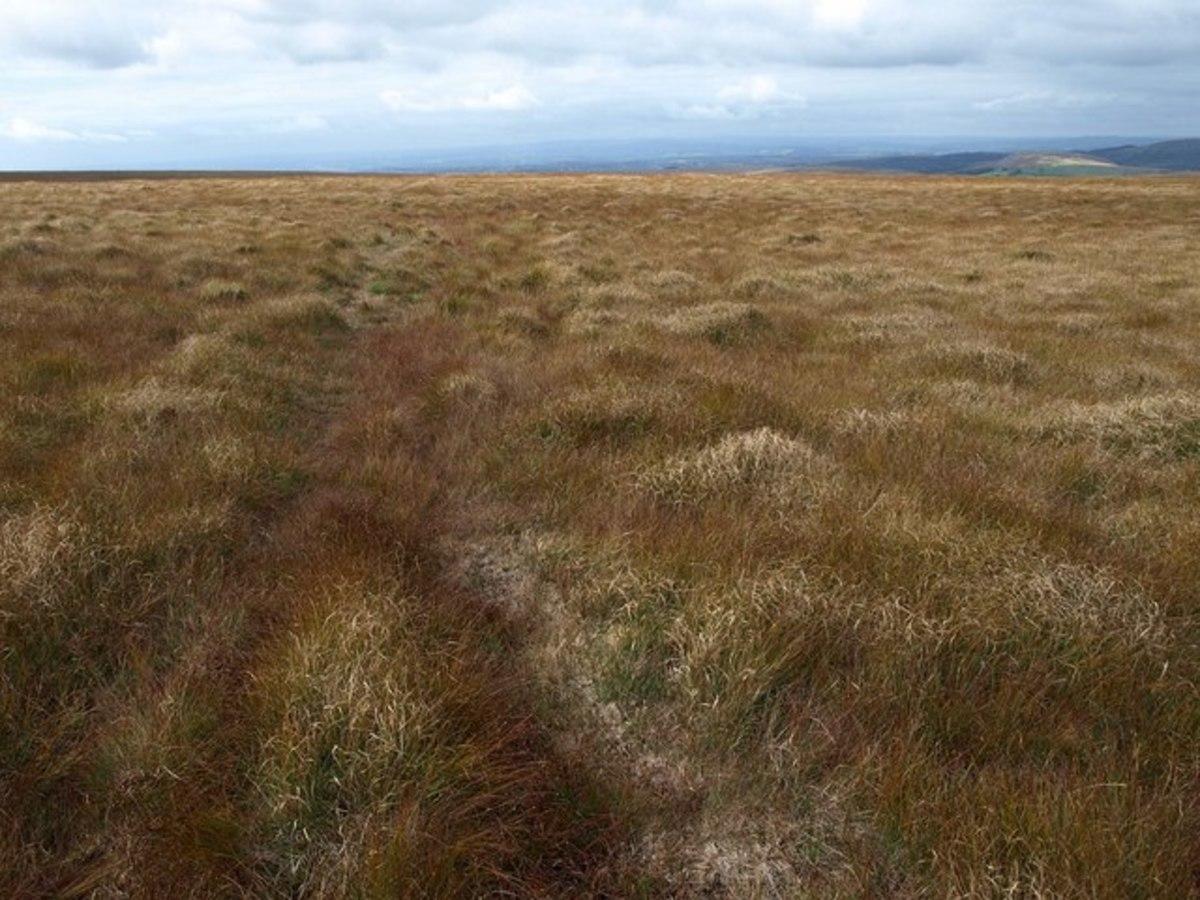 Raised bog in Ireland