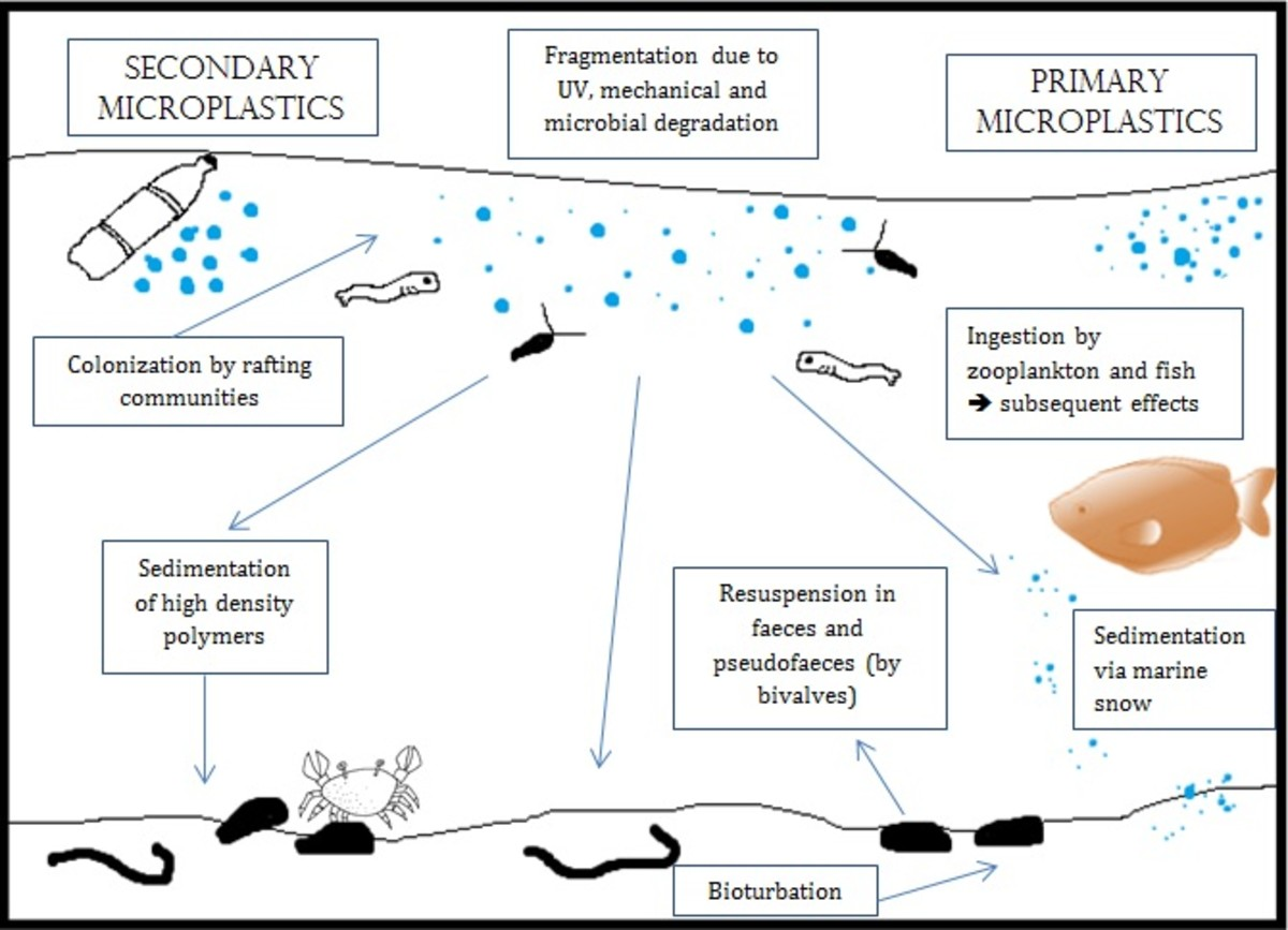 The fate of microplastics in the ocean