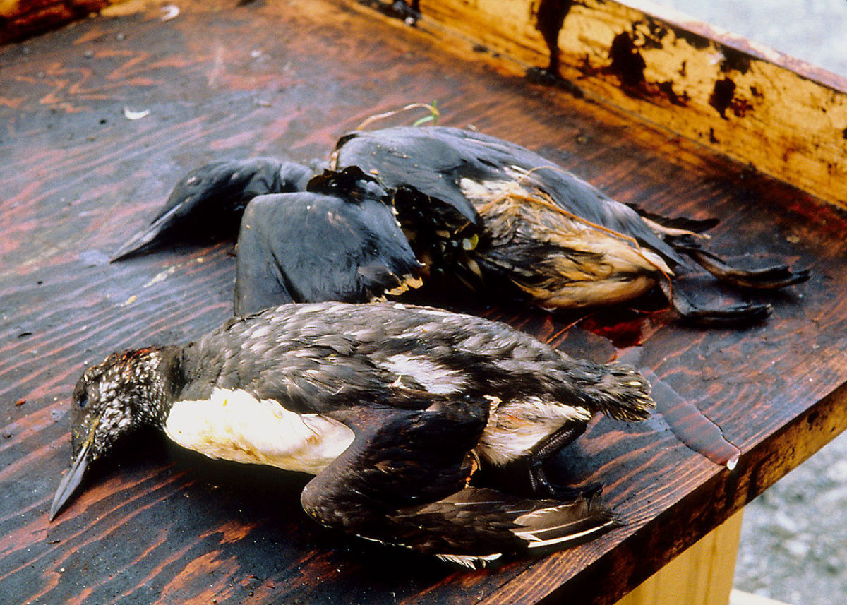 Oil spills end up coating and often killing everything for miles around.