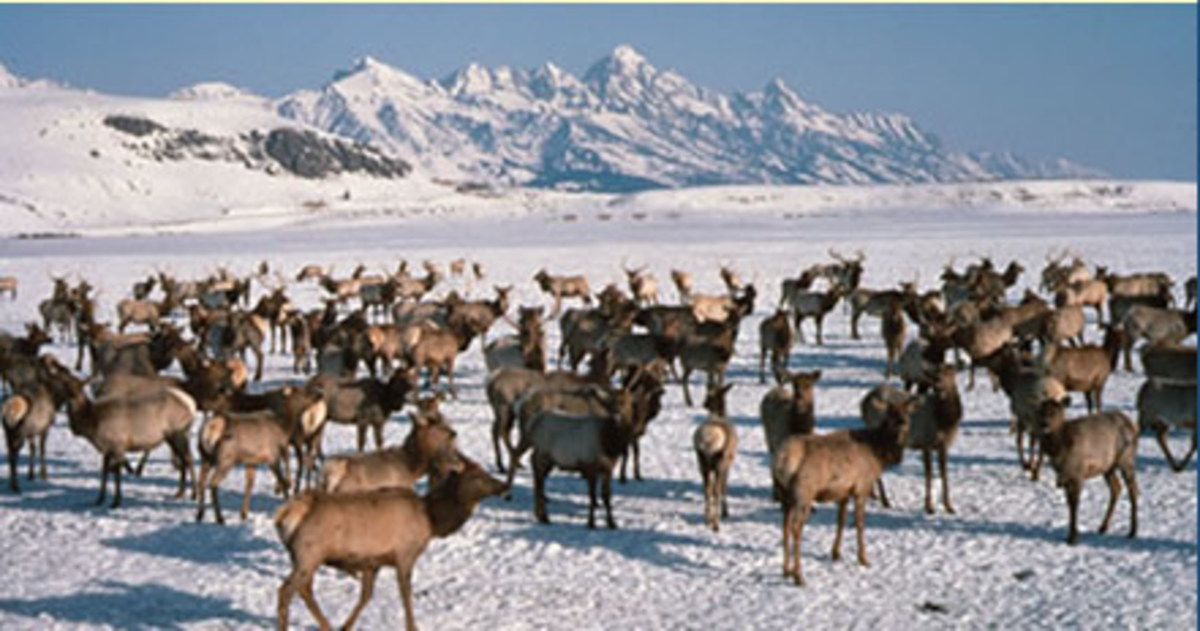 As well as having to survive a famine. People will have to survive a bitter northern hemisphere winter. The survivors would be those prepared to hunt and trap animals like Elk.