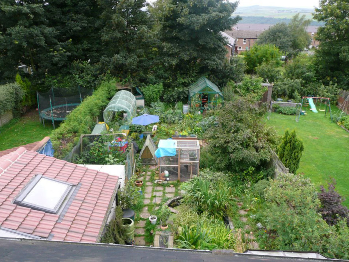 Homegrown permaculture garden in Sheffield, UK. Growing companion plants of different levels together - like the Native American corn, beans, and squash - alleviates the need for manmade fertilizers and pesticides that pollute.