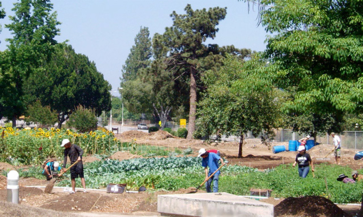 Organic community gardens also reduce the need for mass produced agricultural farms. This one is a school garden, but every neighborhood could have one of their own, if they were willing to work at it.