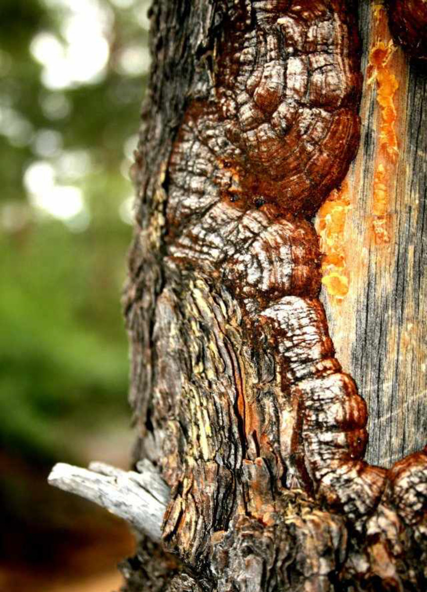 A close-up of a tree trunk.