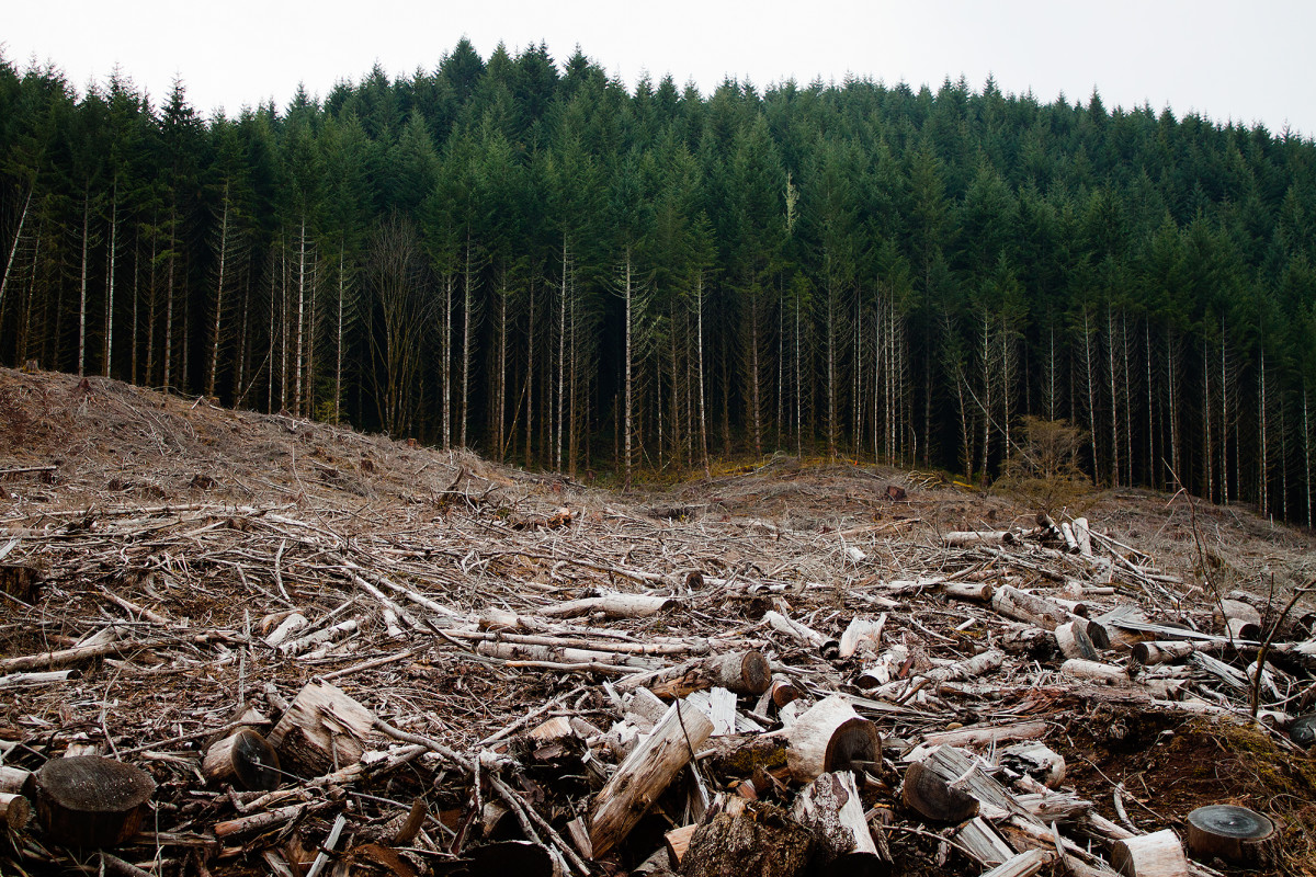 Clear cutting in Oregon.