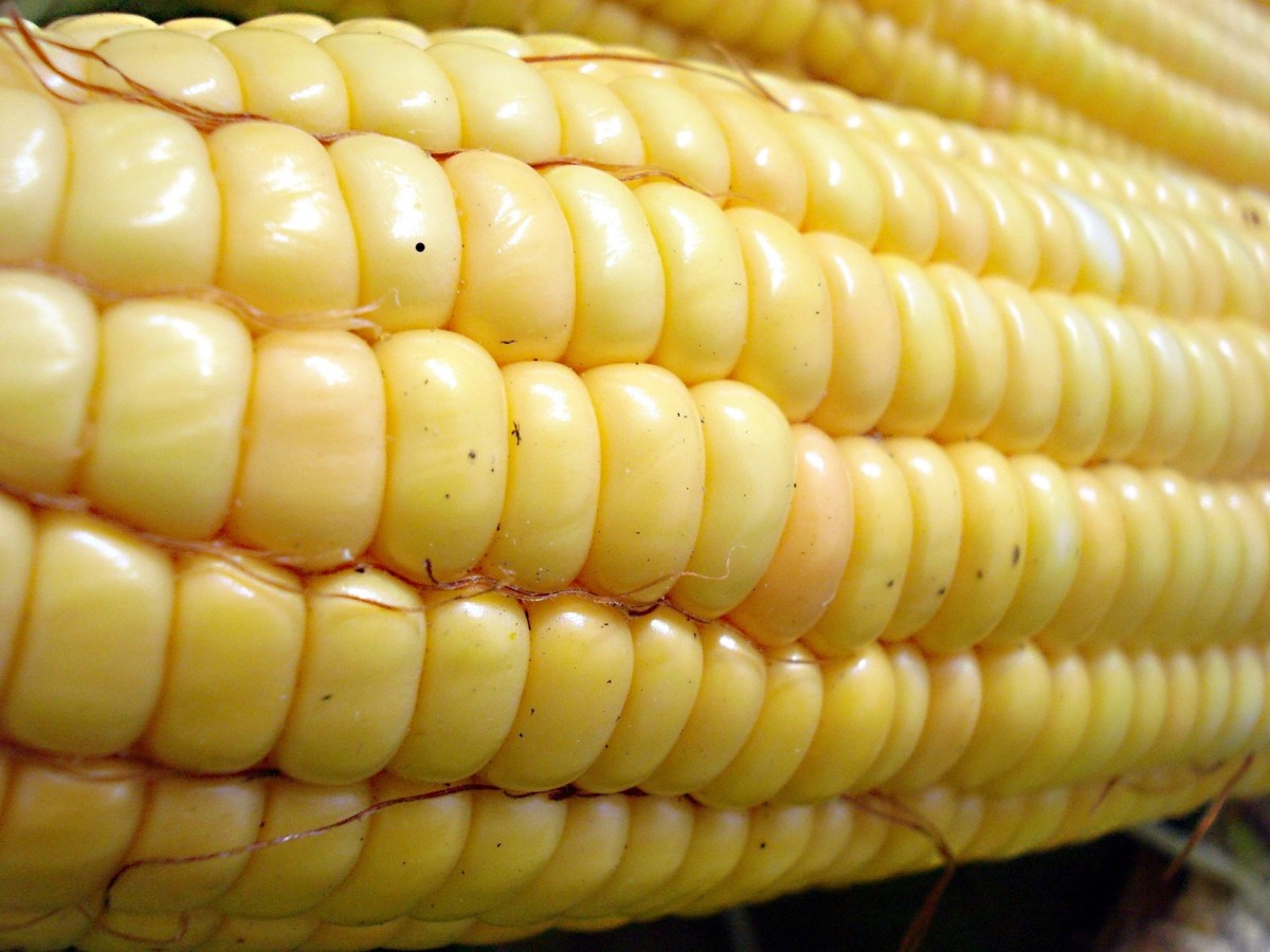 PLA plastic can be made from corn.