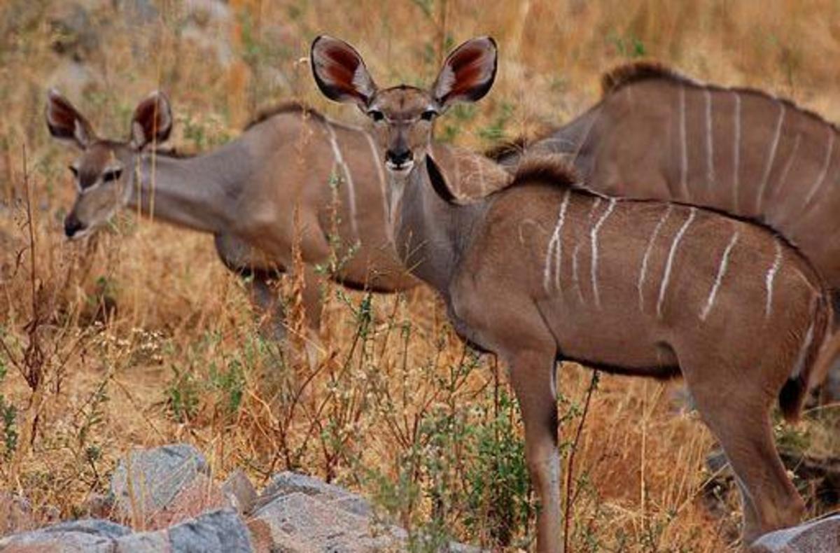 Herd animals cooperate to survive.