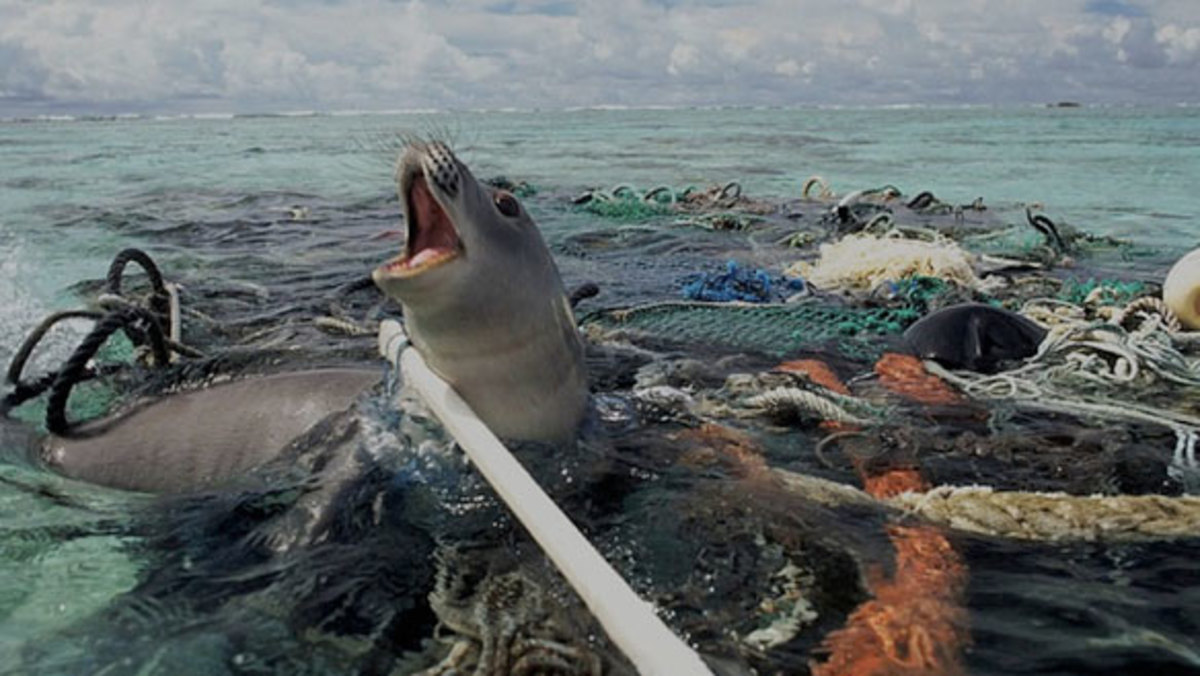 Image result for water pollution