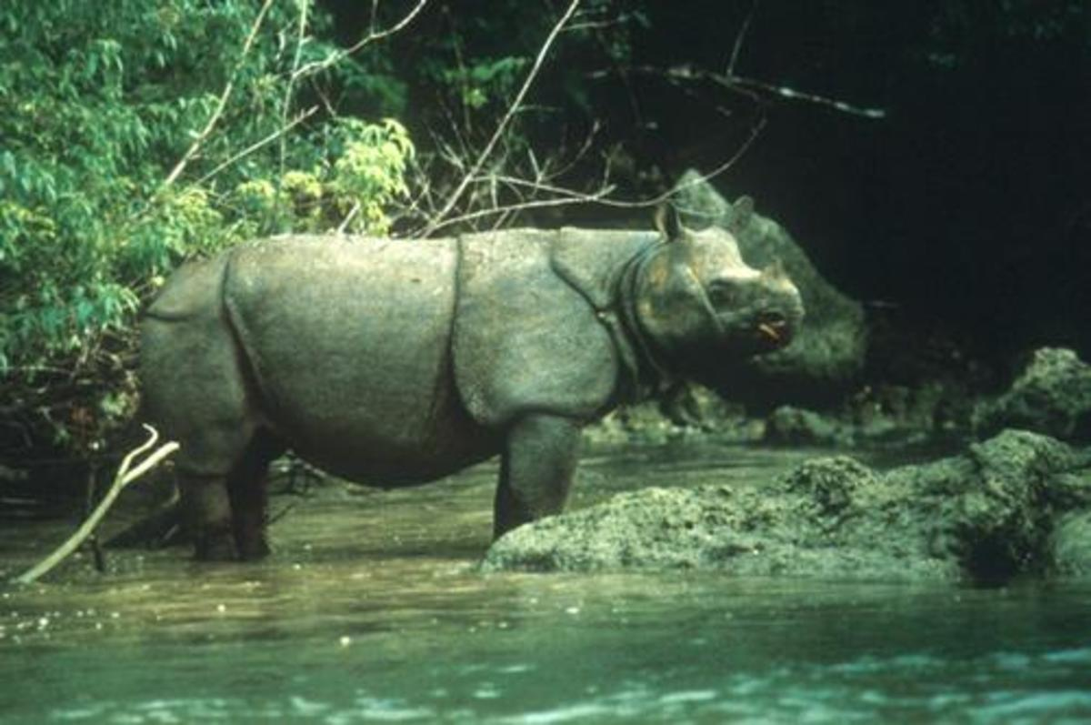 the-top-5-most-endangered-species-in-2014