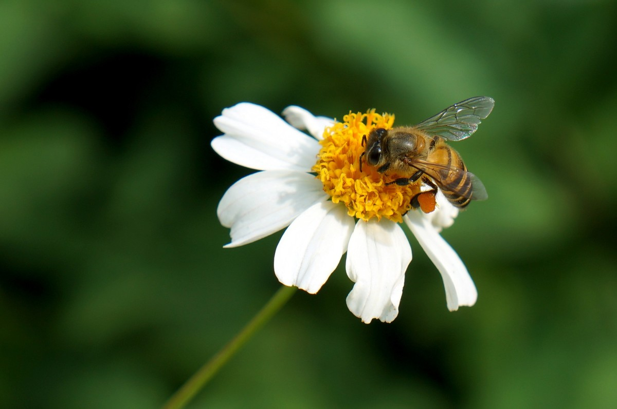 How is human activity killing bees?