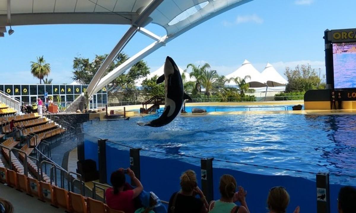 killer whales training