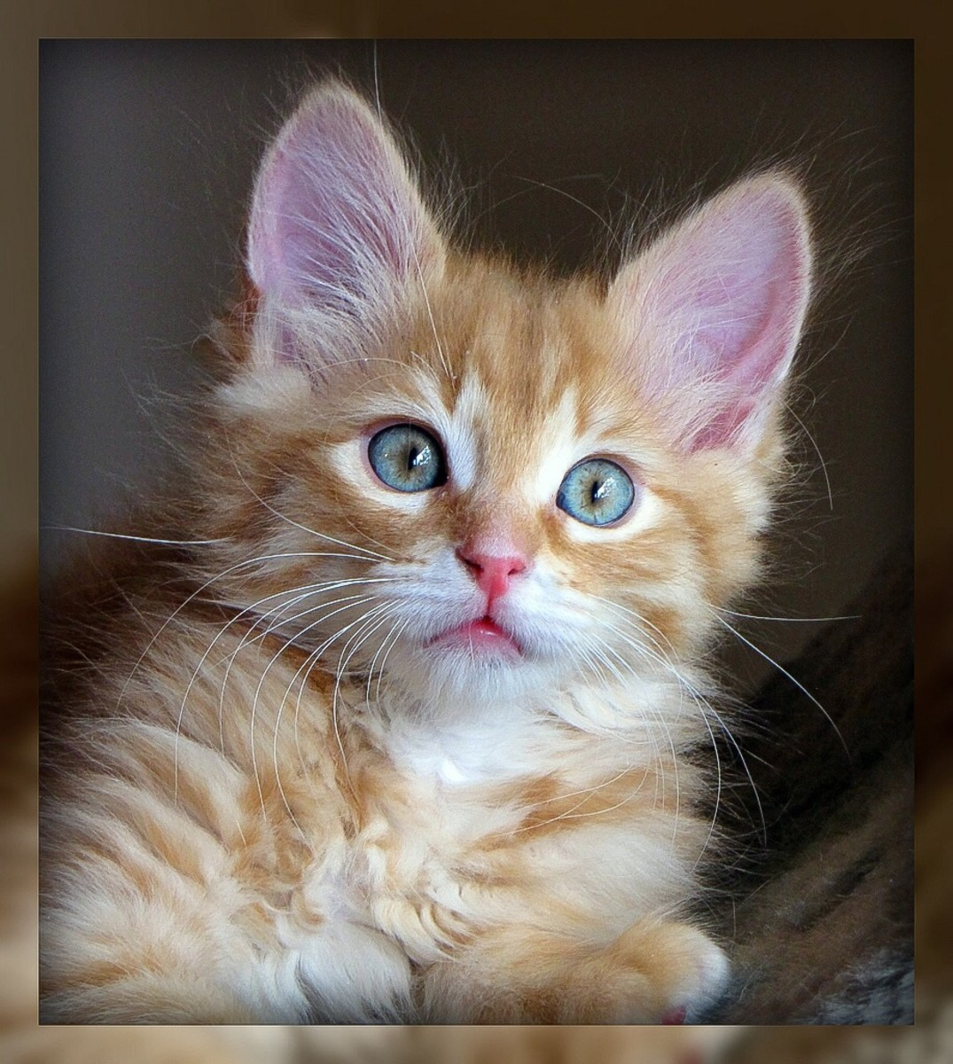 A kitten with a very alert expression