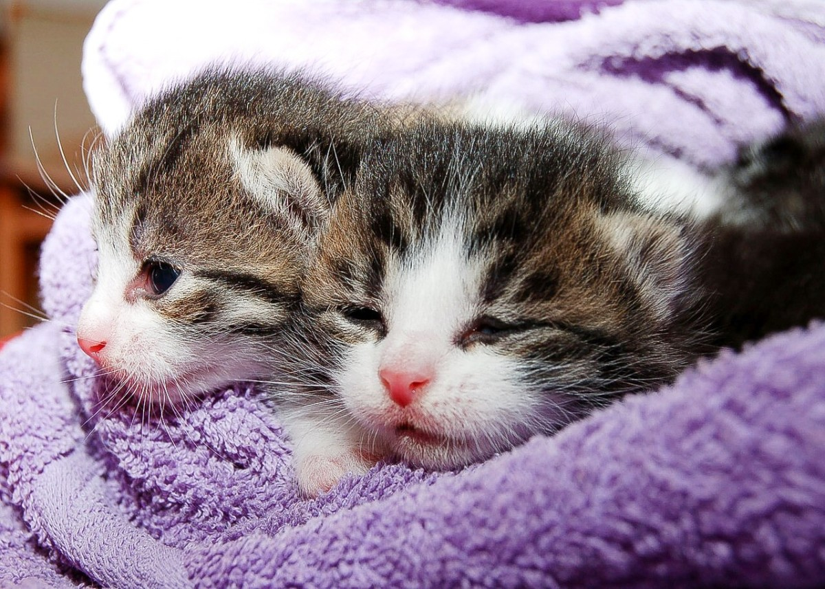 Cats are cute, but kittens are even cuter! Attractive or funny videos or photos may be useful for charity fundraising.