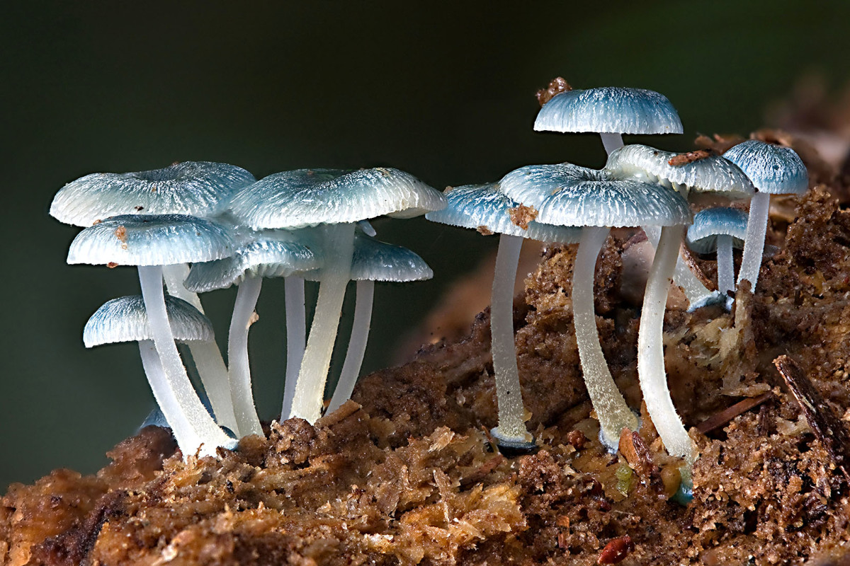 Fungi help to clean up the natural waste of the world—where would we be without them?