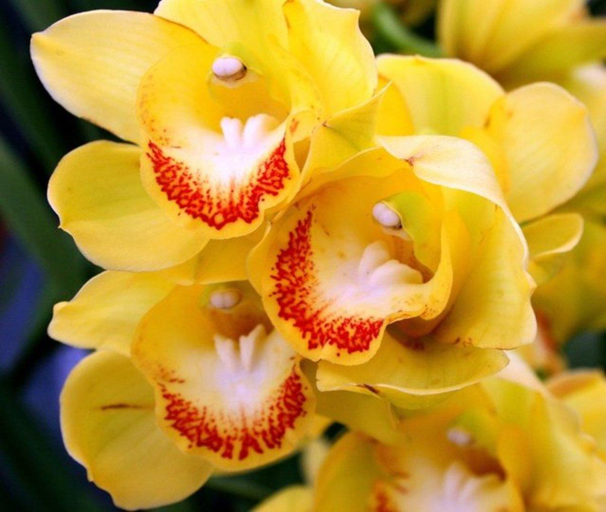 Beautiful Orchids.