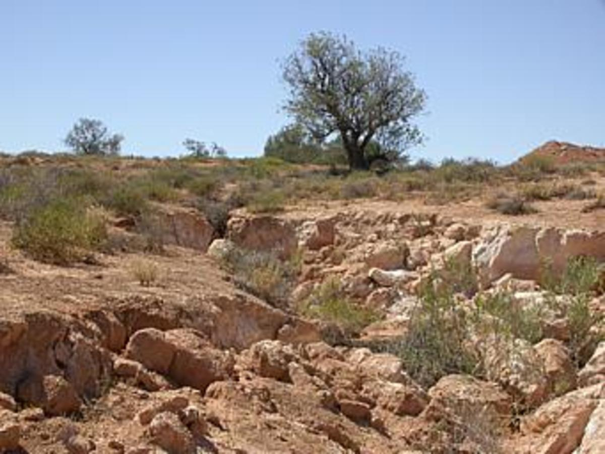 Erosion caused by rabbits overgrazing.