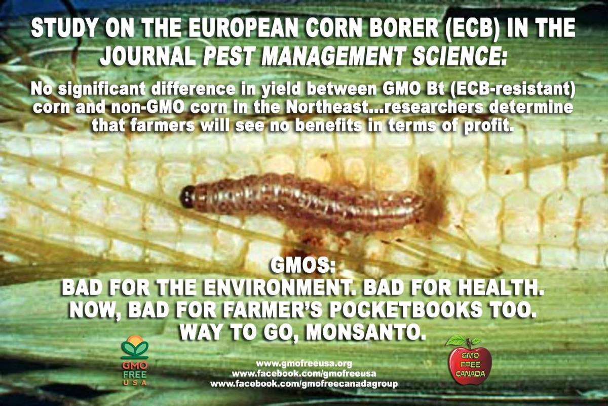 GMO is bad for health, bad for the agricultural economy and bad for the environment. GMO is only good for the pockets of the richest elitists.