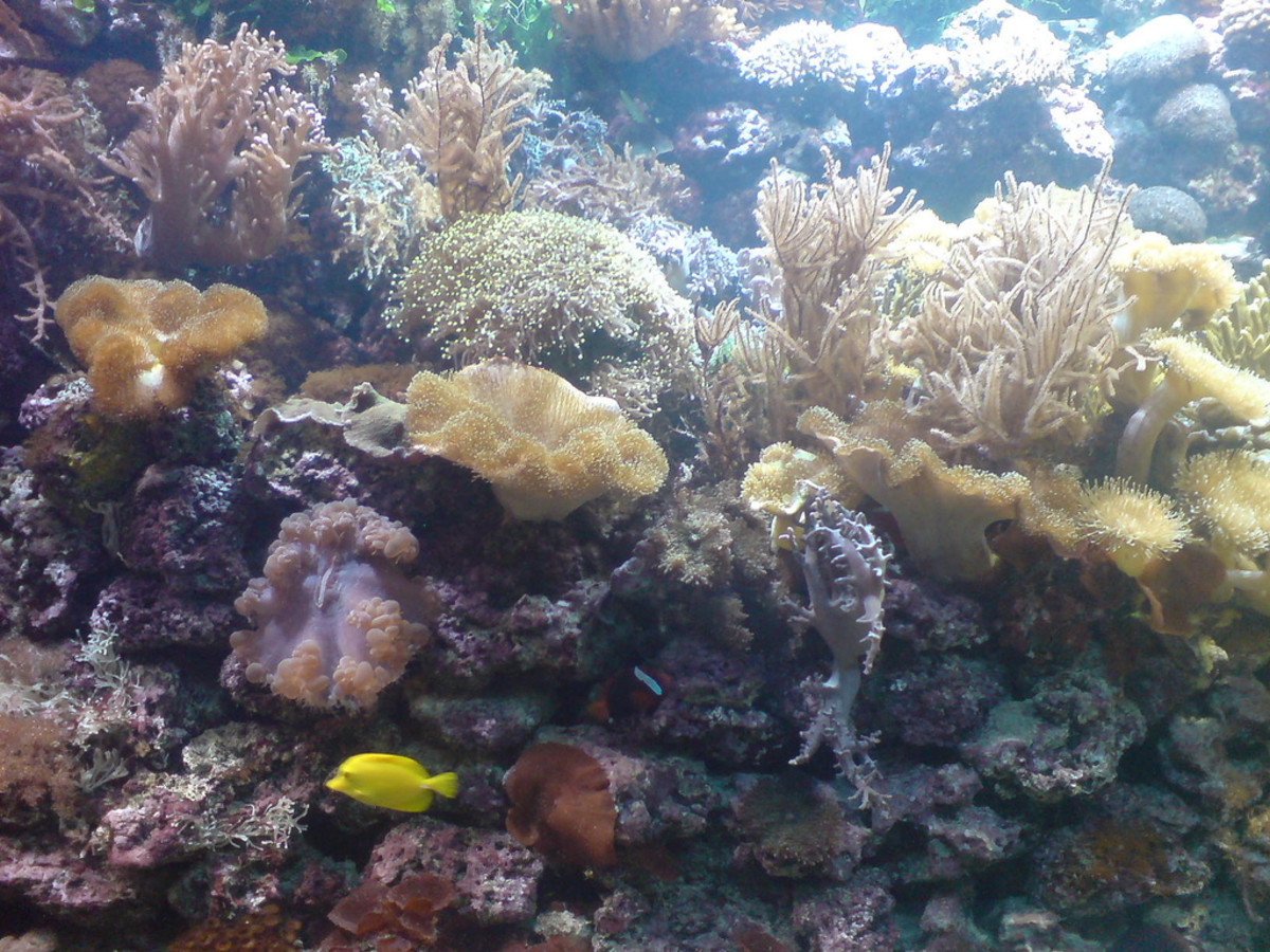 Marine organisms in a reef.