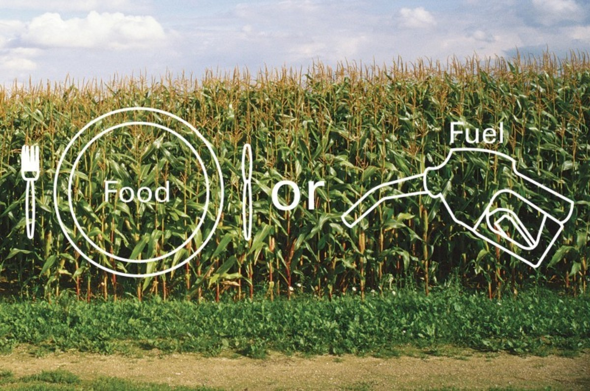 The question remains, food or fuel?