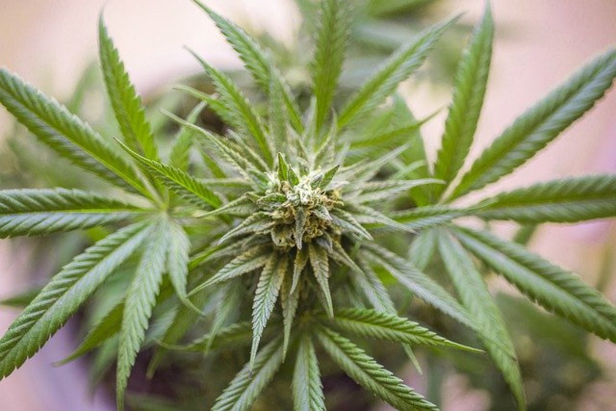 why-its-time-for-america-to-legalize-marijuana