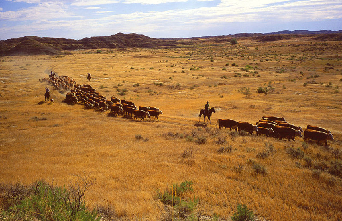 Overgrazing by livestock can lead to land degradation
