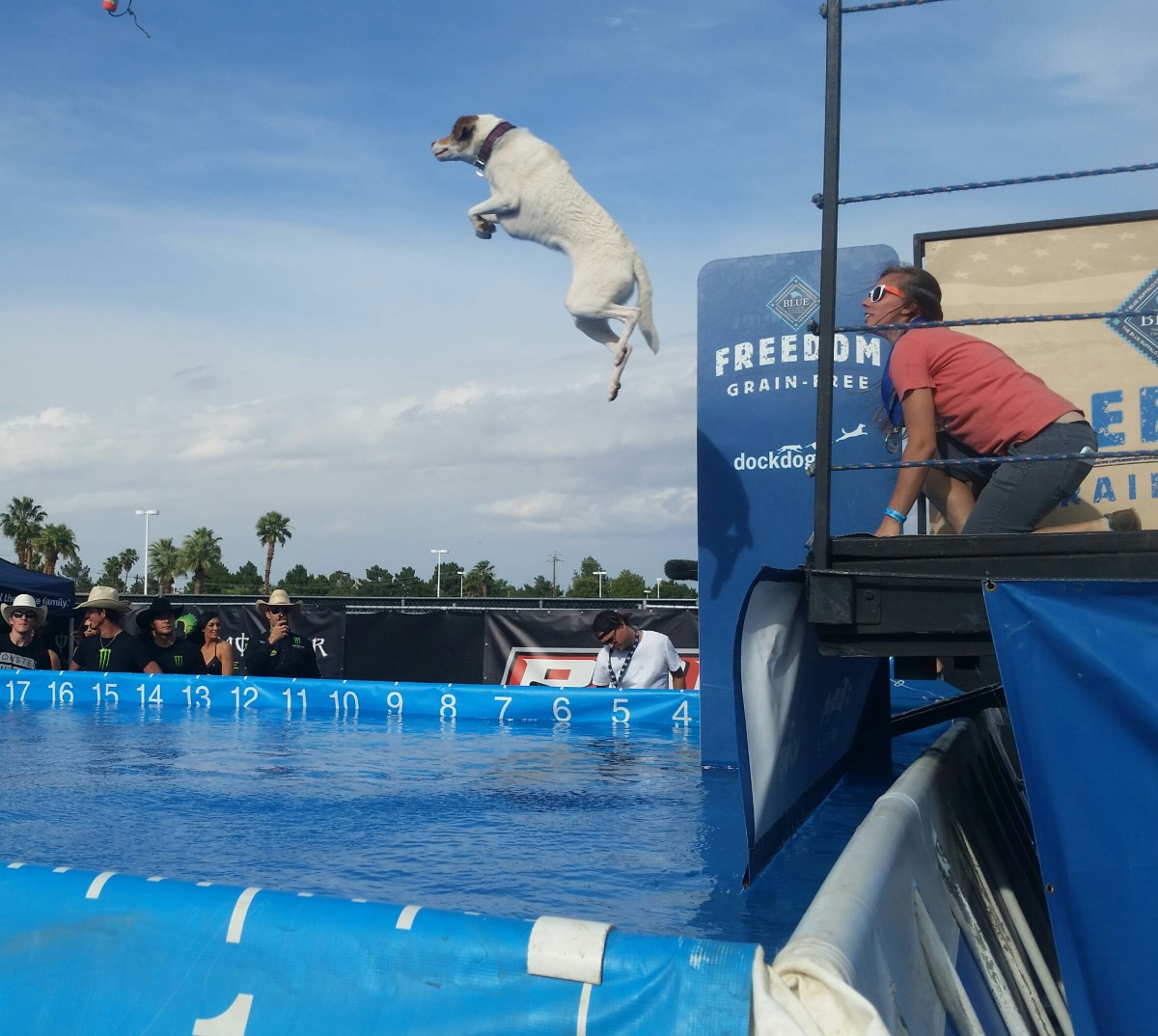"One of the ""Dock Dogs"" performing in a canine aquatic competition. These dogs were amazing!"