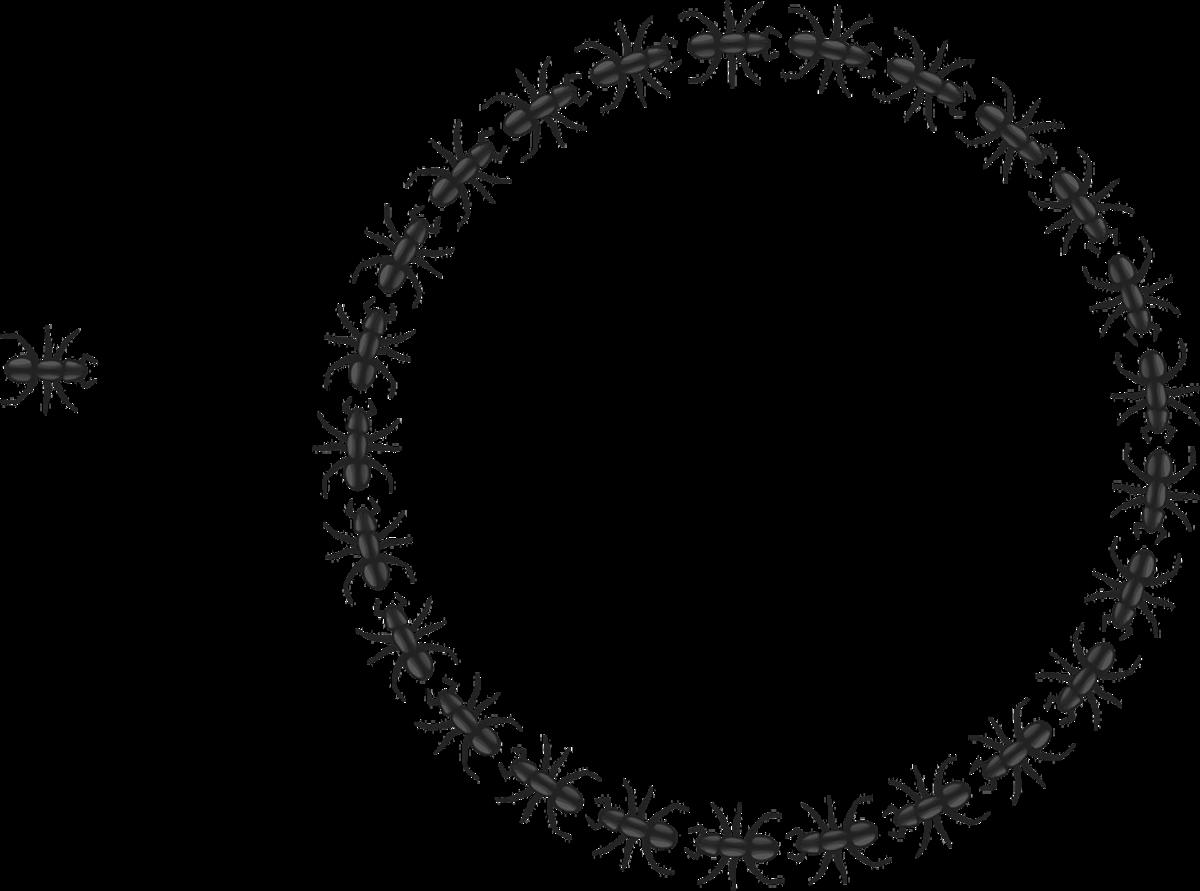 Circle of Ants