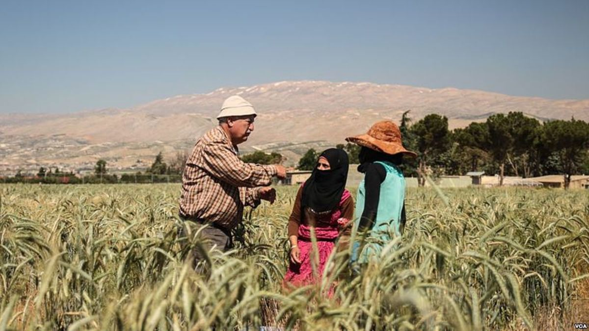 Fields in Bekaa Valley