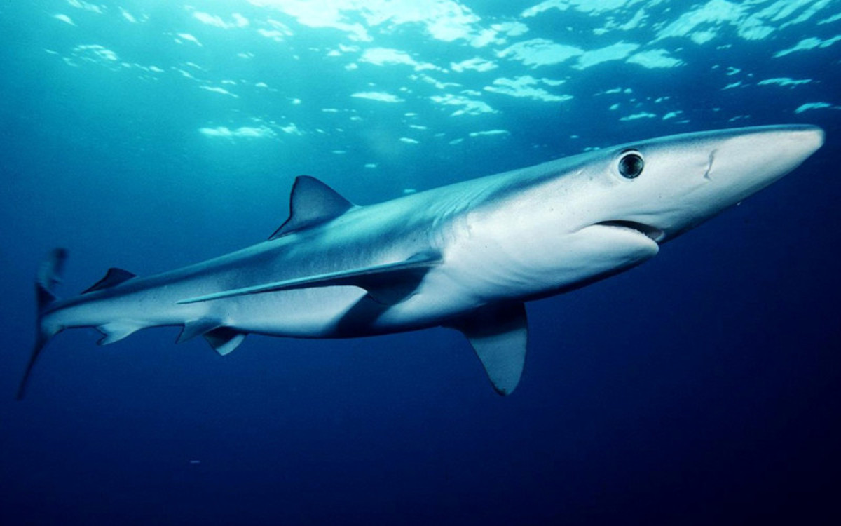 Bite marks from blue sharks were found Michelle's body, but they likely occurred after her death.
