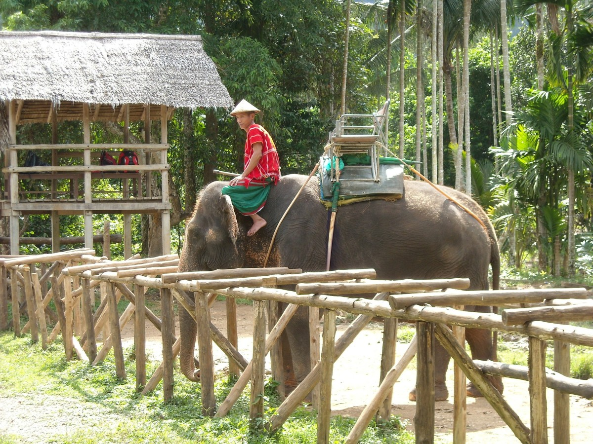 Animal attractions such as elephant rides should be avoided if you want to be an ethical tourist. Elephants are often abused and mistreated by handlers in order to make them domicile enough the ride.