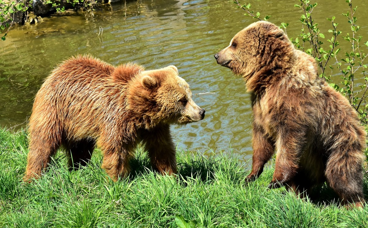 Feeding wild animals is against the law in many countries.