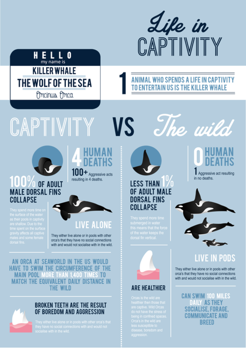 Infographic on Captive Orca Statistics