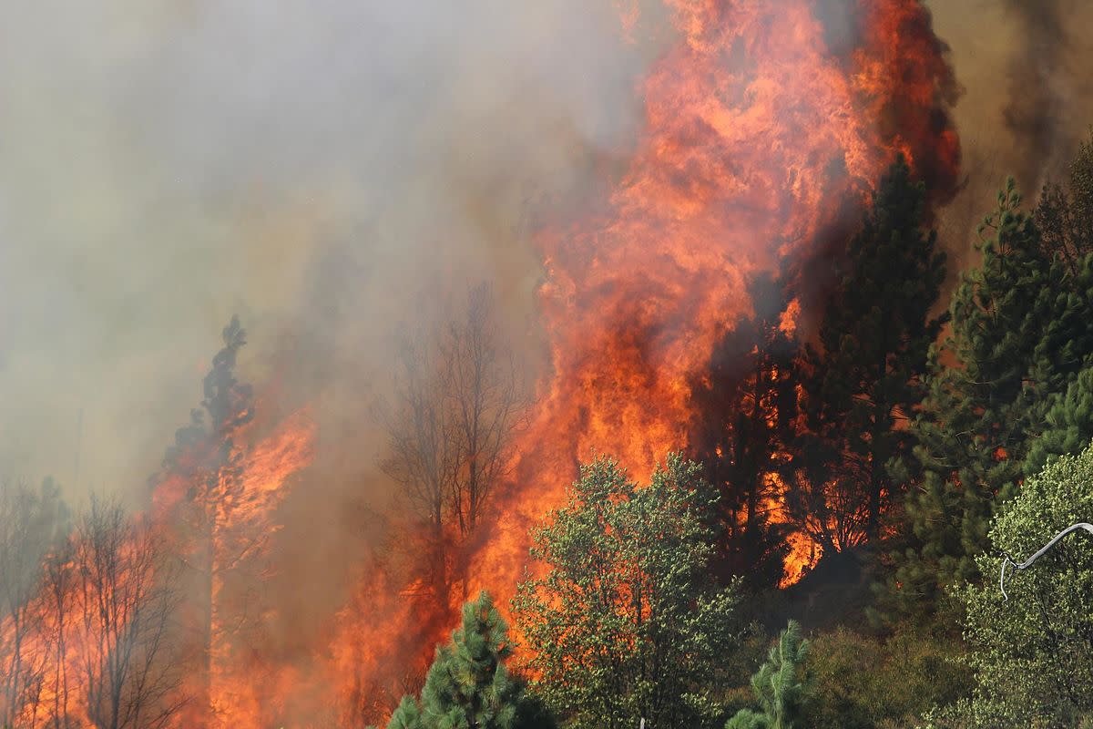 Many wildfires are started by carelessly discarded cigarette butts.