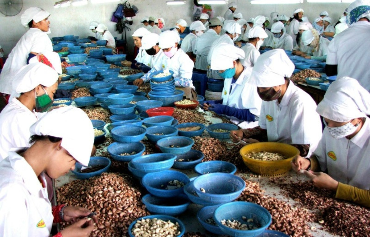 Vietnam produces 590 kilotons of cashews per year.