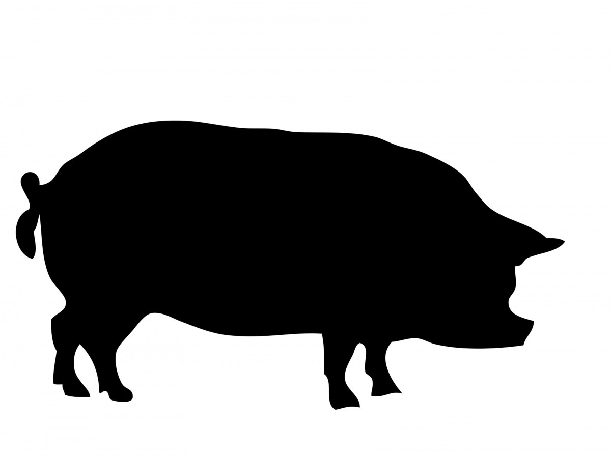A pig was the sole casualty of the Pig War.