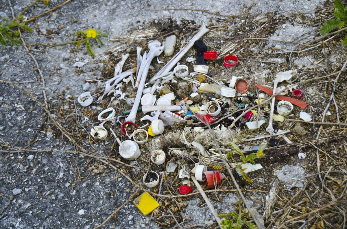Plastic waste is a massive issue that is harmful to animals, plants and the environment as a whole.