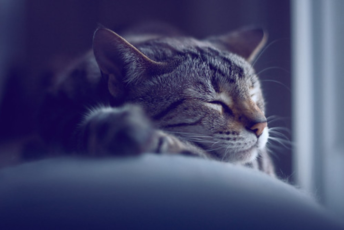 To truly master the art of idleness one needs to arrange to be reincarnated as a cat.