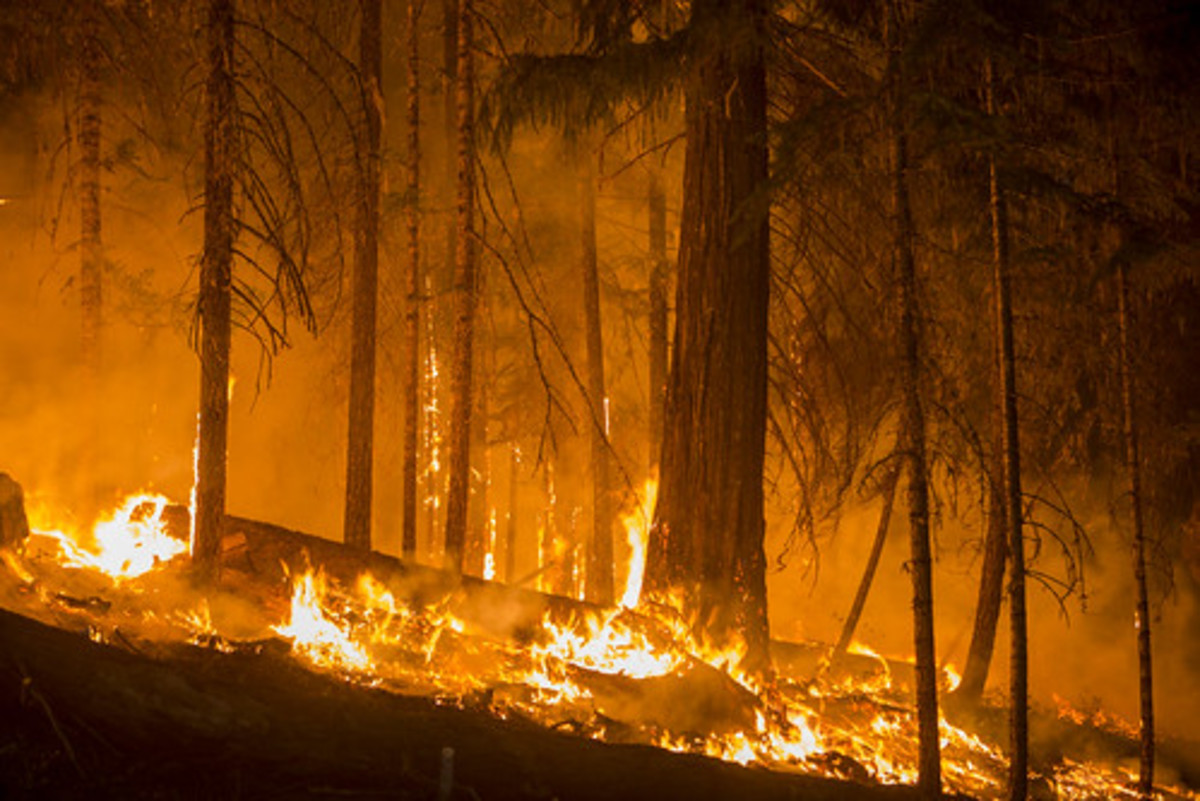 A hotter climate means more forest fires releasing more carbon dioxide creating a hotter climate.