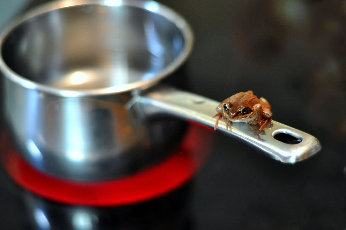 Photograph of a Frog on a Pan (2010); Photograph by James Lee courtesy of Wikimedia Commons. The Photographer has released this work with some rights reserved (see license):  https://creativecommons.org/licenses/by/2.0/deed.en