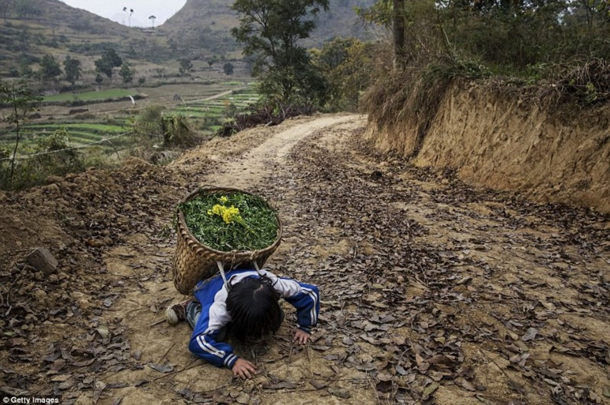 'Left behind' child Luo Hongni, 11, collapses from the weight as she carries flowers while doing chores in the fields in Anshun, China (Daily Mail.com 2017)