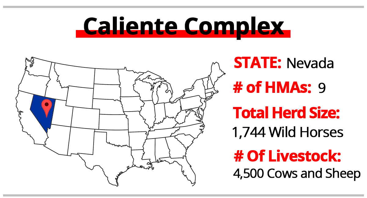 The number of animals at the time of the Caliente roundups.