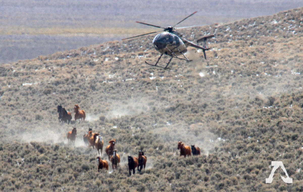 The BLM wild horse and burro roundups of   2019.