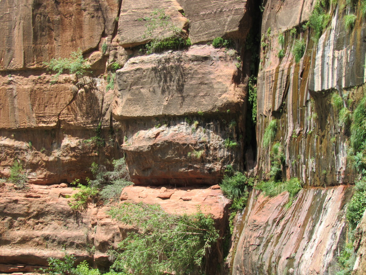 Moss-covered sandstone, Weeping Rock