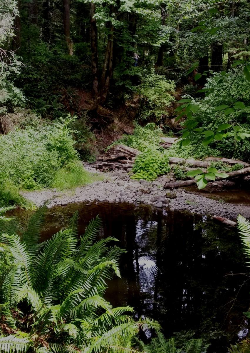 Beautiful Millard Park!