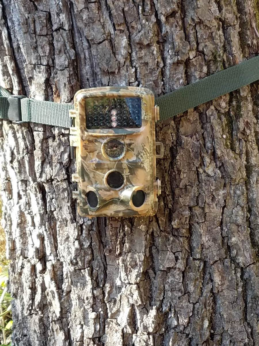 Campark T45 Hunting Camera