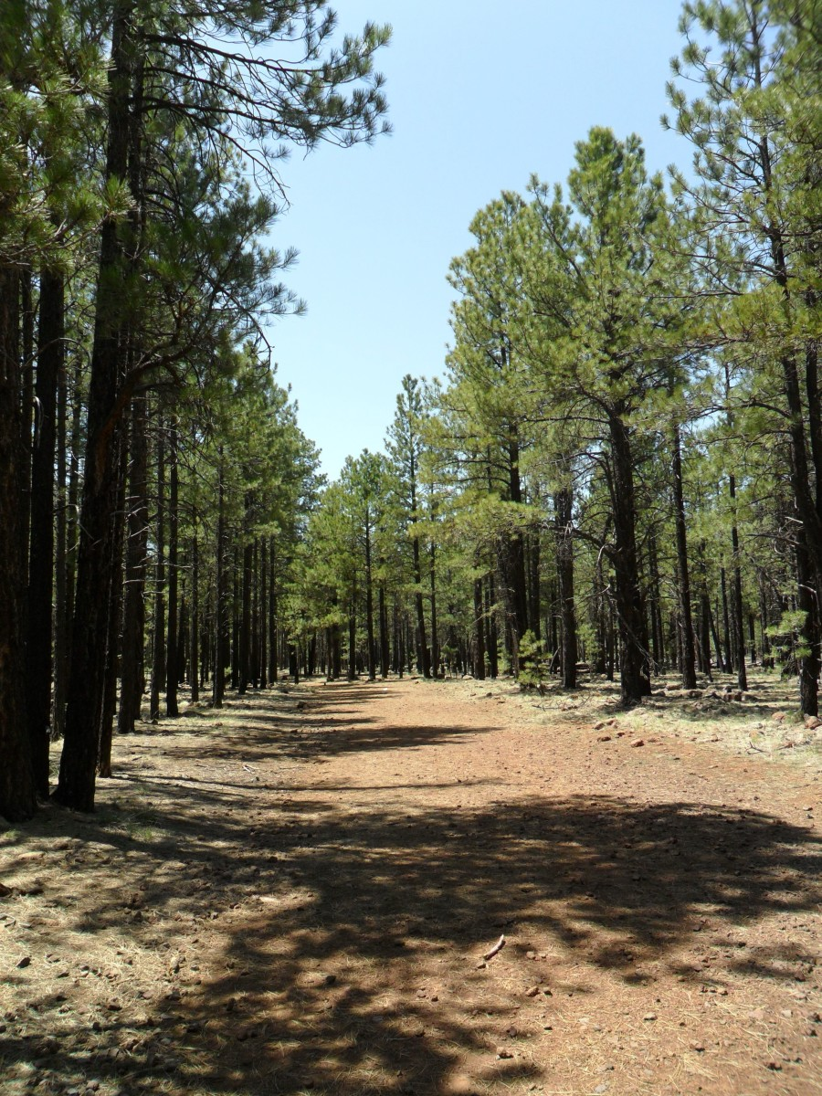 Trail from the parking lot to the Lava River Cave entrance, Coconino National Forest.