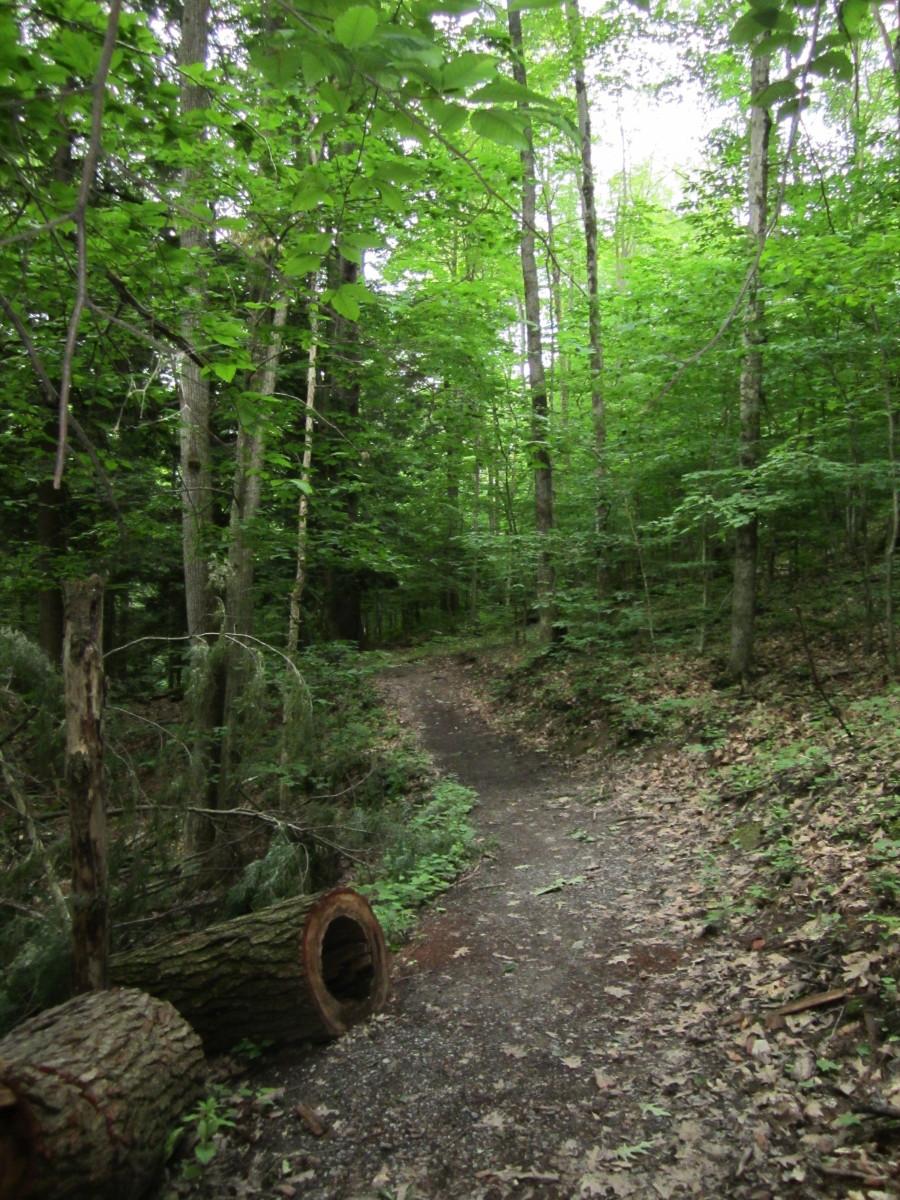 Overlook Trail Leonard Harrison State Park
