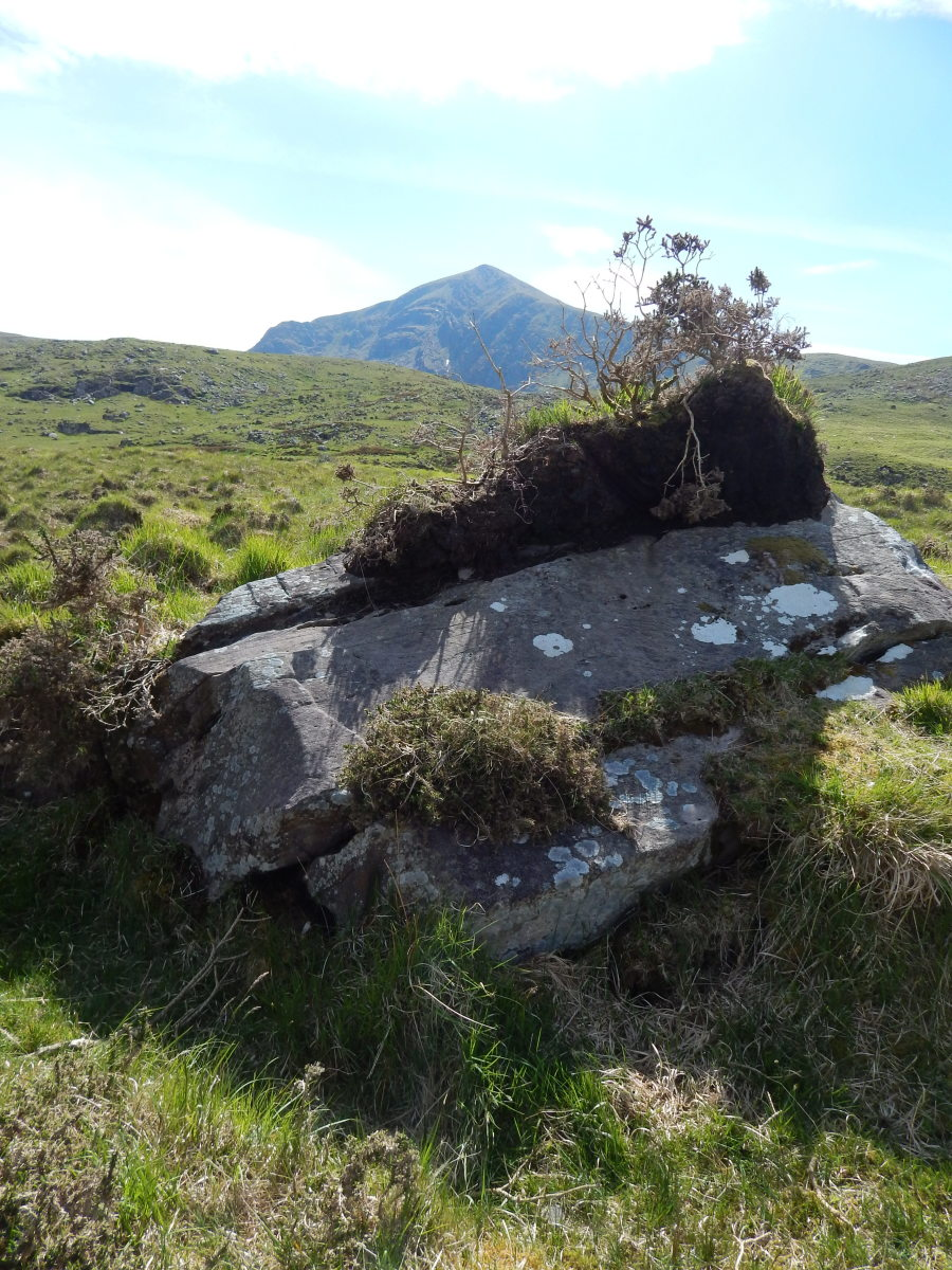 A boulder, dumped by a glacier, sticks out from the peat bog.