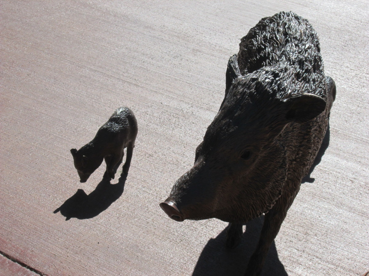 Javelina statue, Red Rock Visitor Center (USFS)